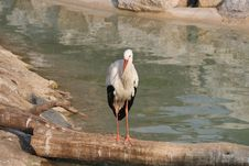 Free Stork Stock Image - 8685151