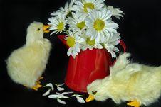 Free Daisy Ducklings Royalty Free Stock Photos - 8685558