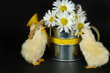 Free Ducklings And Daisies Stock Photo - 8685560