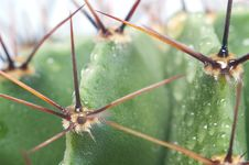 Free Macro Of Green Cactus Royalty Free Stock Images - 8686369