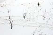 Free Traces On Snow Stock Photography - 8687032