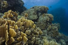 Free Red Sea Underwater Scene Stock Photography - 8689962