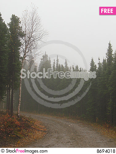 Fog on a Drive in a Dense Alaska Spruce Forest Stock Photo
