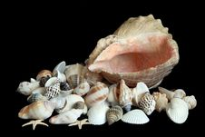 Free Sea Shells Stock Photos - 8691583