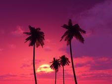 Free Beautiful Sunset Stock Images - 8692234