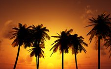 Free Beautiful Sunset Royalty Free Stock Photos - 8692288