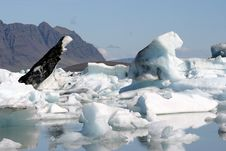 Free Icebergs Stock Images - 8693284