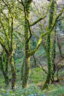 Free Green Forest Royalty Free Stock Photos - 8695108