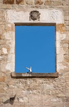 Free Pigeon In A Window Stock Image - 8696311