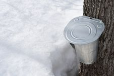 Free Collecting Maple Sap In Spring Stock Photo - 8696800