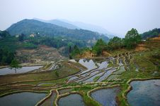 Free Rice Terraced Fields Landscape In China Stock Photo - 8696990
