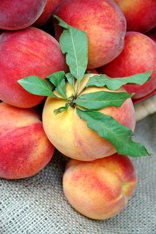 Closeup Of Fresh Peaches Stock Photography
