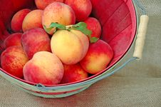 Free A Basket Of Fresh Deliciious Peaches Royalty Free Stock Photography - 8696997