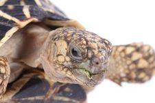Free Turtle Stock Image - 8698711