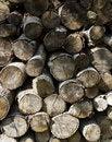 Free Firewood Background Stock Image - 875581