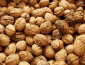 Free Walnuts Royalty Free Stock Photography - 876637