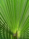 Free Palm Stock Photography - 877102