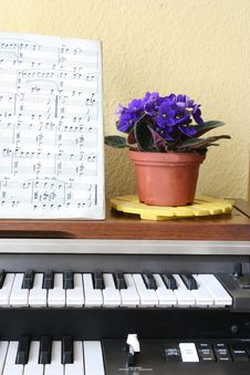 Free Music And Flowers Royalty Free Stock Photography - 870097