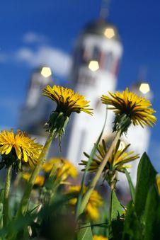 Free The Dandelions Stock Image - 871131