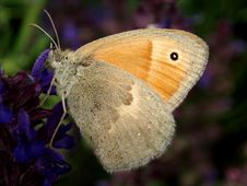Free Butterfly Royalty Free Stock Image - 871236