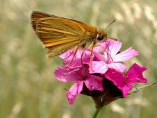 Free Butterfly Stock Photos - 871253
