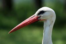 Free Stork Stock Photography - 871282