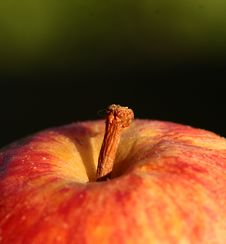 Free Apple Stock Photography - 872682