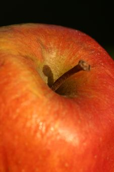 Free Apple Stock Photo - 872690