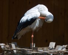 Free Stork Stock Image - 873241