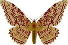 Free Moth Royalty Free Stock Image - 873666