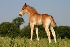 Free Foal On Hill Royalty Free Stock Image - 873916