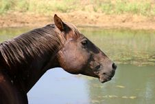 Free Horse At Pond Stock Image - 874331