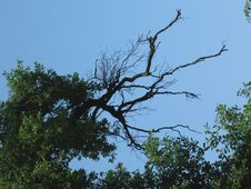 Tree On The Sky Stock Image