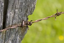 Free Barbed Wire 2 Royalty Free Stock Photo - 877375