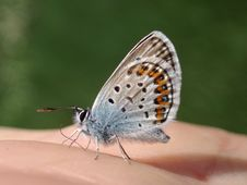 Free Butterfly On My Hand Royalty Free Stock Images - 877509