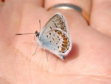 Free Butterfly On Hand Royalty Free Stock Photography - 877517