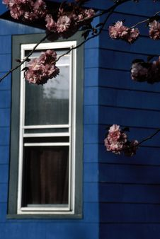 Free Pink Flowers Blue House Stock Images - 878314