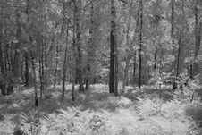Free Infrared Forest Royalty Free Stock Photo - 878375