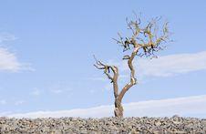 Free Dead Tree 03 Royalty Free Stock Image - 878546