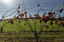 Vines On Green Stock Photo