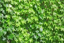 Free Leafy Background Stock Photography - 879022
