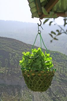 Hanging Garden Green Outdoor Plant Stock Image