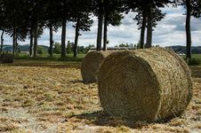 Free Hay Bale Stock Photos - 879343
