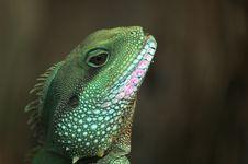 Free Thai Water Dragon Royalty Free Stock Image - 879426