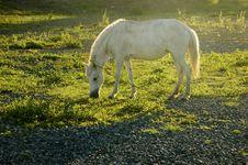 Free White Horse Stock Image - 879441