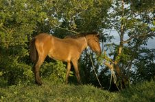 Free Poor Horse Stock Photos - 879503