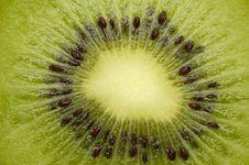 Free Kiwi Stock Photo - 879690