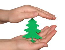 The Plastic Tree In Hand. Stock Photo