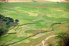 Free Terraced Rice Field In Sapa Stock Photo - 8702520