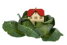 Free House In Cabbage On White Royalty Free Stock Photography - 8703647